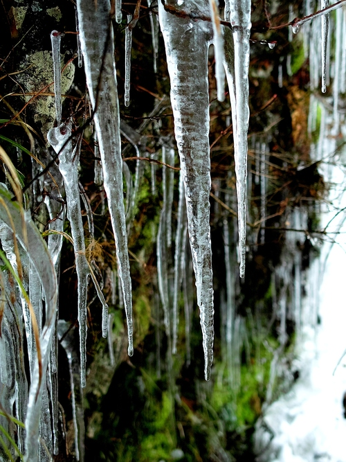 今冬の最低気温、-4.1℃・・・ツララと雪景色_d0005250_16302066.jpg
