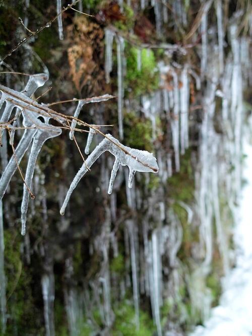 今冬の最低気温、-4.1℃・・・ツララと雪景色_d0005250_16351753.jpg