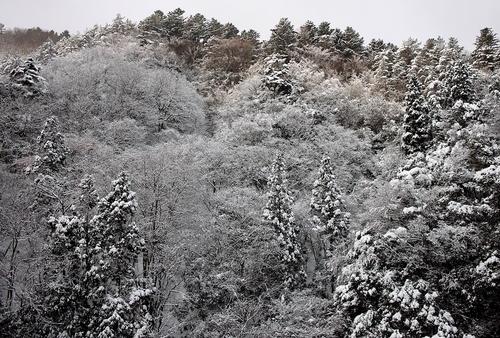 今冬の最低気温、-4.1℃・・・ツララと雪景色_d0005250_16353550.jpg
