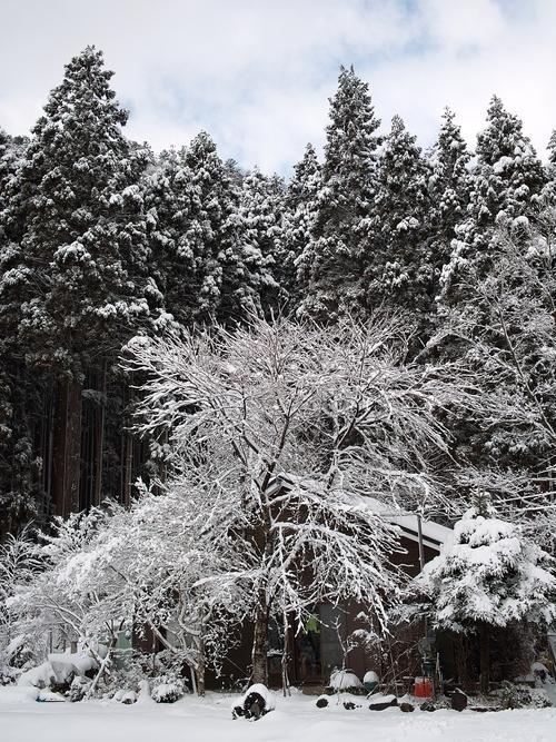 今冬の最低気温、-4.1℃・・・ツララと雪景色_d0005250_16401022.jpg