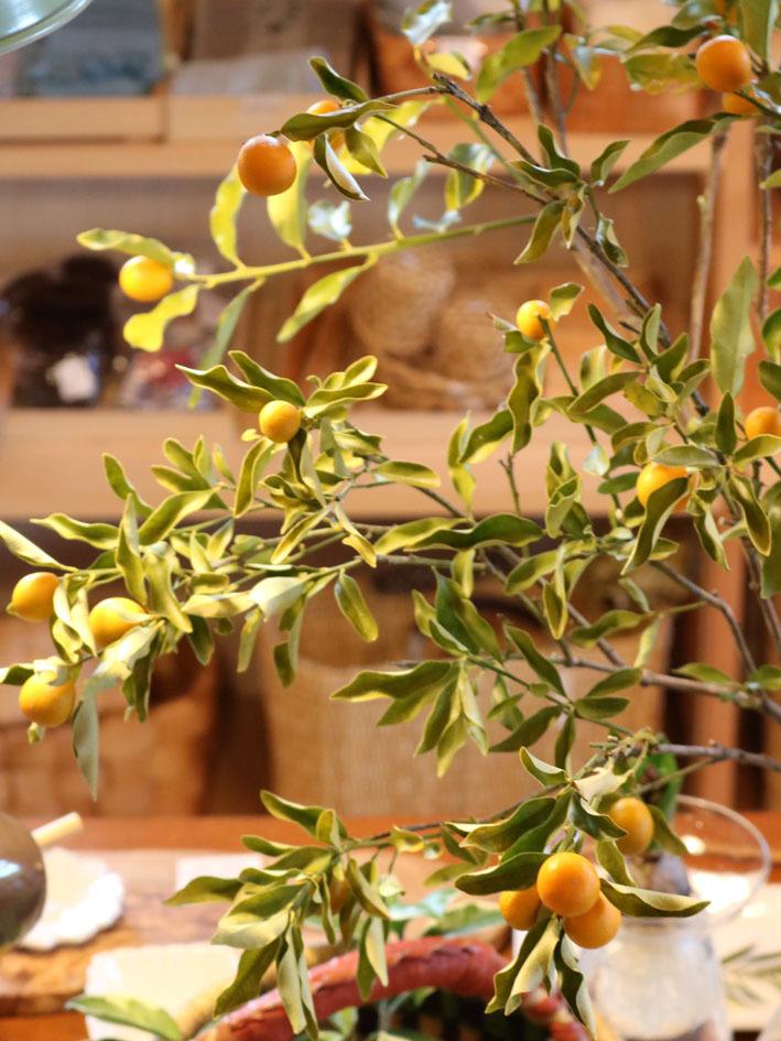 金柑と日本水仙を飾って 〜2月半ばの店内〜_c0334574_19460536.jpeg