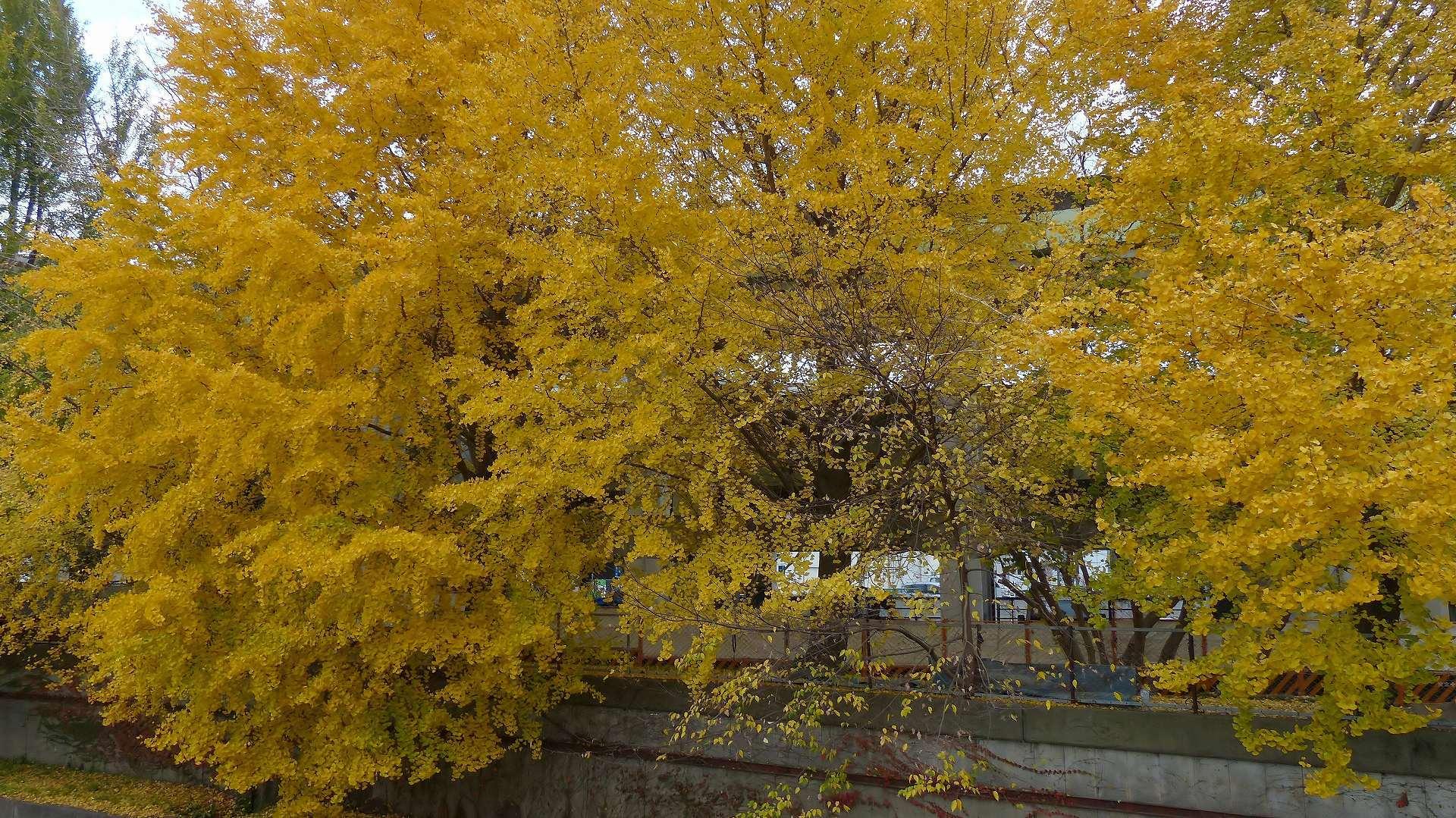 黄色の誘惑_a0185081_09145238.jpg