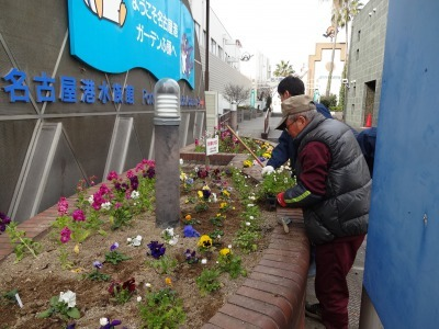 ガーデンふ頭総合案内所前花壇の植替えR2.2.10_d0338682_16553918.jpg