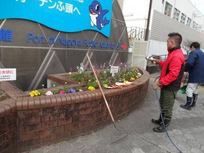ガーデンふ頭総合案内所前花壇の植替えR2.2.10_d0338682_16555438.jpg