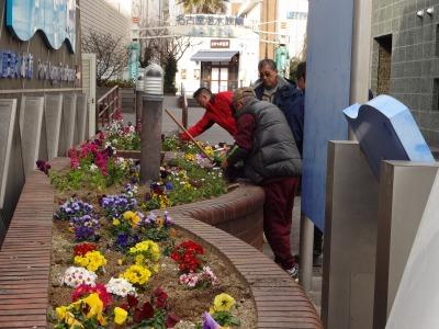 ガーデンふ頭総合案内所前花壇の植替えR2.2.10_d0338682_16560678.jpg