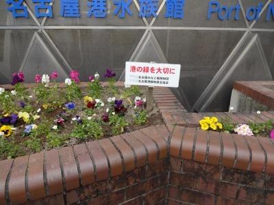 ガーデンふ頭総合案内所前花壇の植替えR2.2.10_d0338682_16563325.jpg