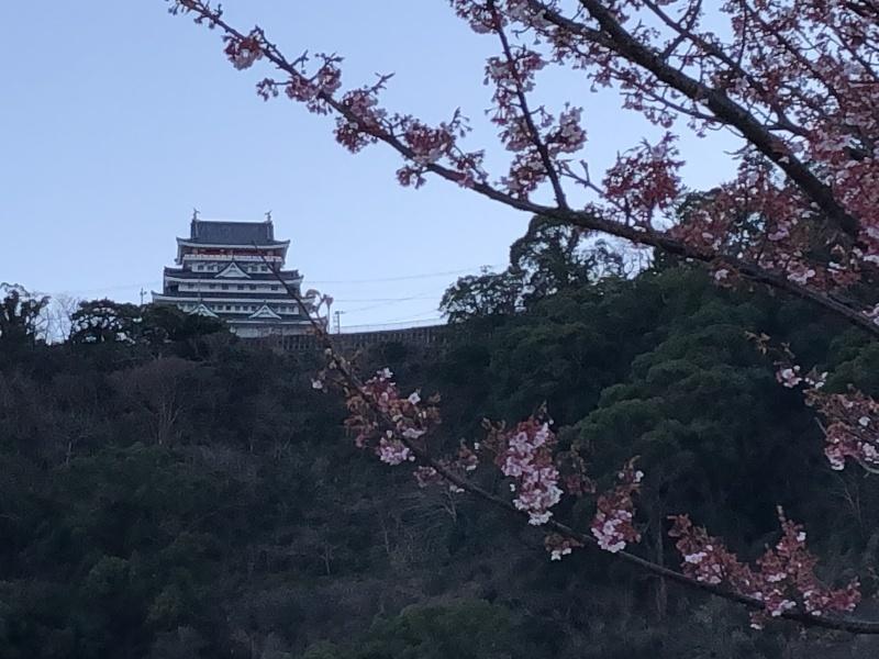 河津桜_a0129492_19594276.jpeg