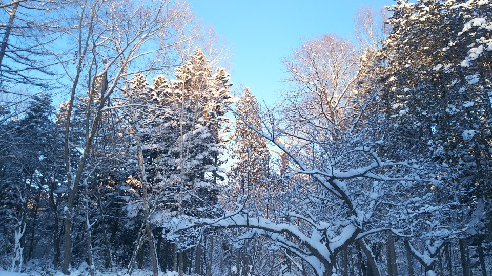 雪はふるふる、雪は降る_b0343293_22004459.jpg