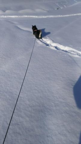 雪はふるふる、雪は降る_b0343293_22030900.jpg