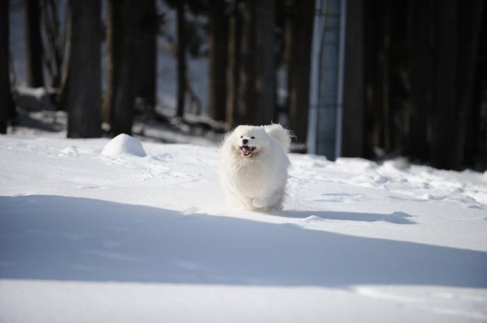 岐阜雪遊び♪_a0049296_07001558.jpg