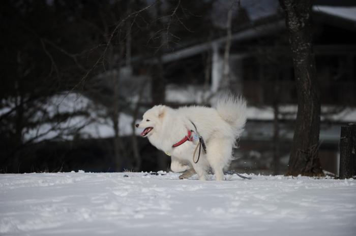 岐阜雪遊び♪_a0049296_07072186.jpg