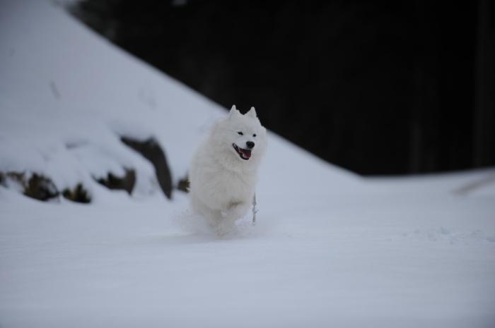 岐阜雪遊び♪_a0049296_07190429.jpg