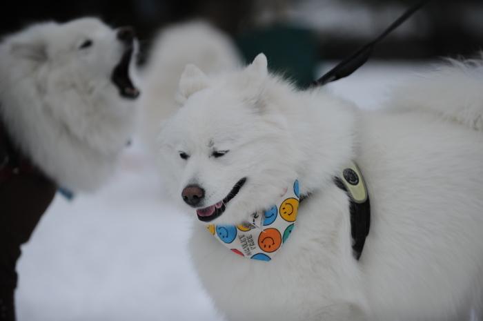 岐阜雪遊び♪_a0049296_07204065.jpg