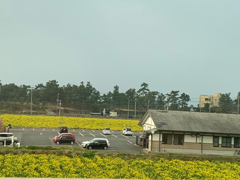 庭のラナンキュラス・ラックスと菜の花畑_d0090298_20132157.jpg