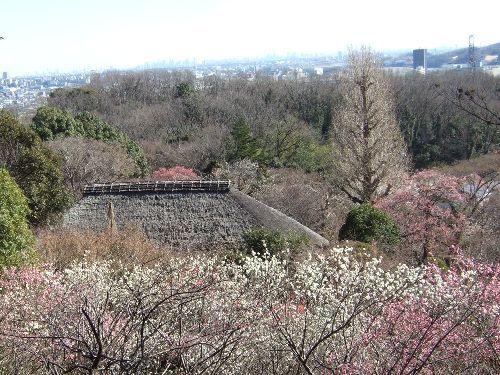 2月11日(火) 百草園_d0048312_16445362.jpg