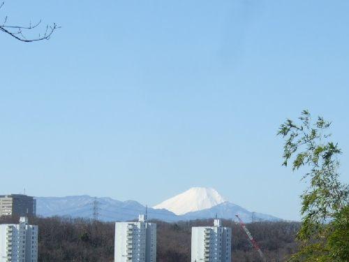 2月11日(火) 百草園_d0048312_16454941.jpg