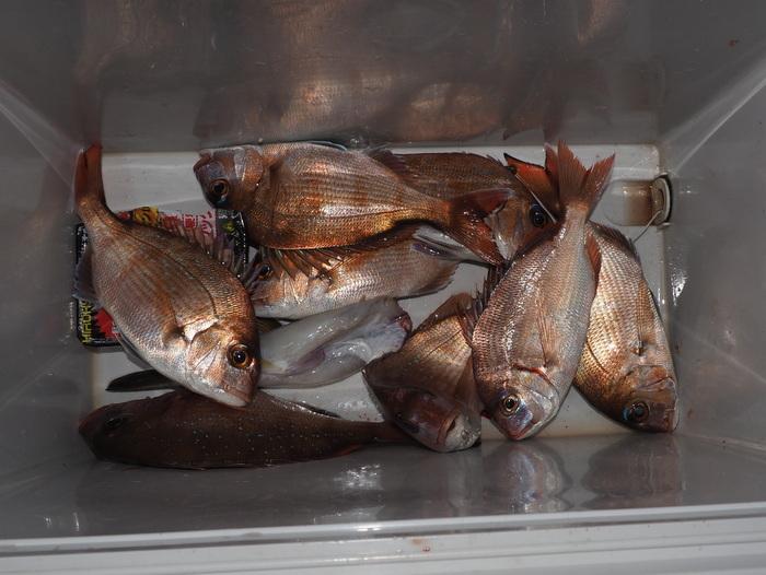 夫の釣果(鯛とチダイ)とその後_c0116915_23404368.jpg