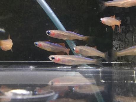 200213 熱帯魚 金魚 めだか 水草_f0189122_15055986.jpeg