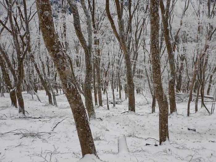 霧氷を求めて高見山へ_c0038434_21180592.jpg