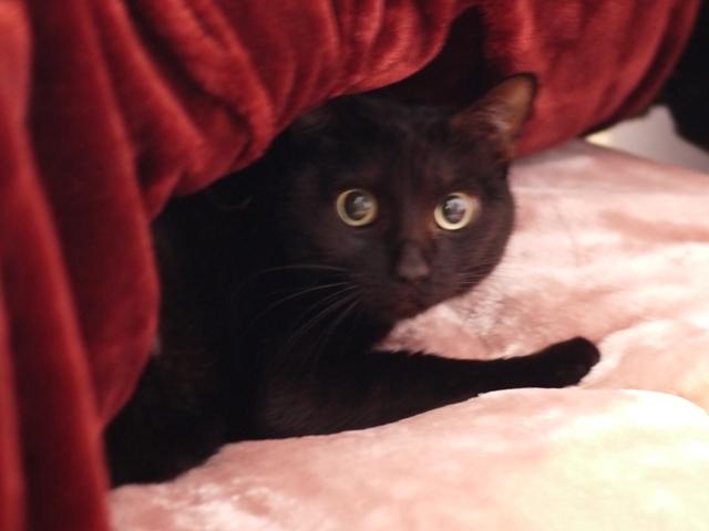 猫のお留守番 ナータちゃん編。_a0143140_21445095.jpg