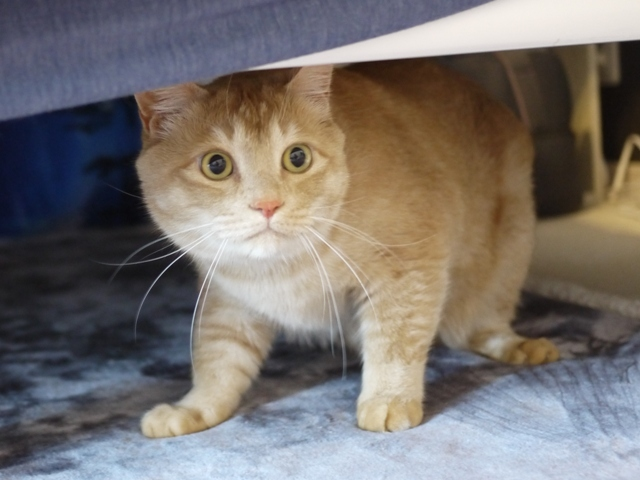猫のお留守番 アンバーくん編。_a0143140_21474620.jpg