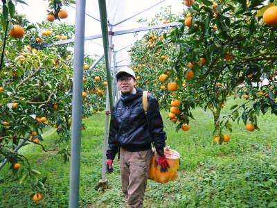 究極の柑橘『せとか』令和2年の先行予約受付スタート(前編) 小春農園の『せとか』の美味しさの秘密!_a0254656_17301951.jpg