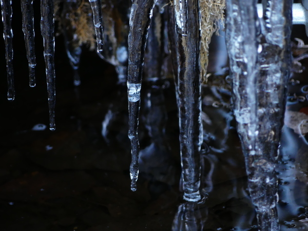 寒い朝_a0351368_13145875.jpg
