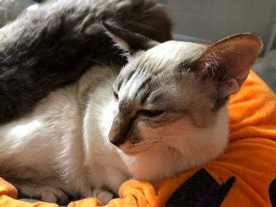 生猫おふとん_a0001971_04435830.jpg