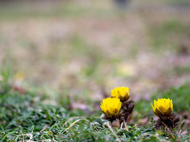 もうすぐ春ですね_d0251171_20283896.jpg