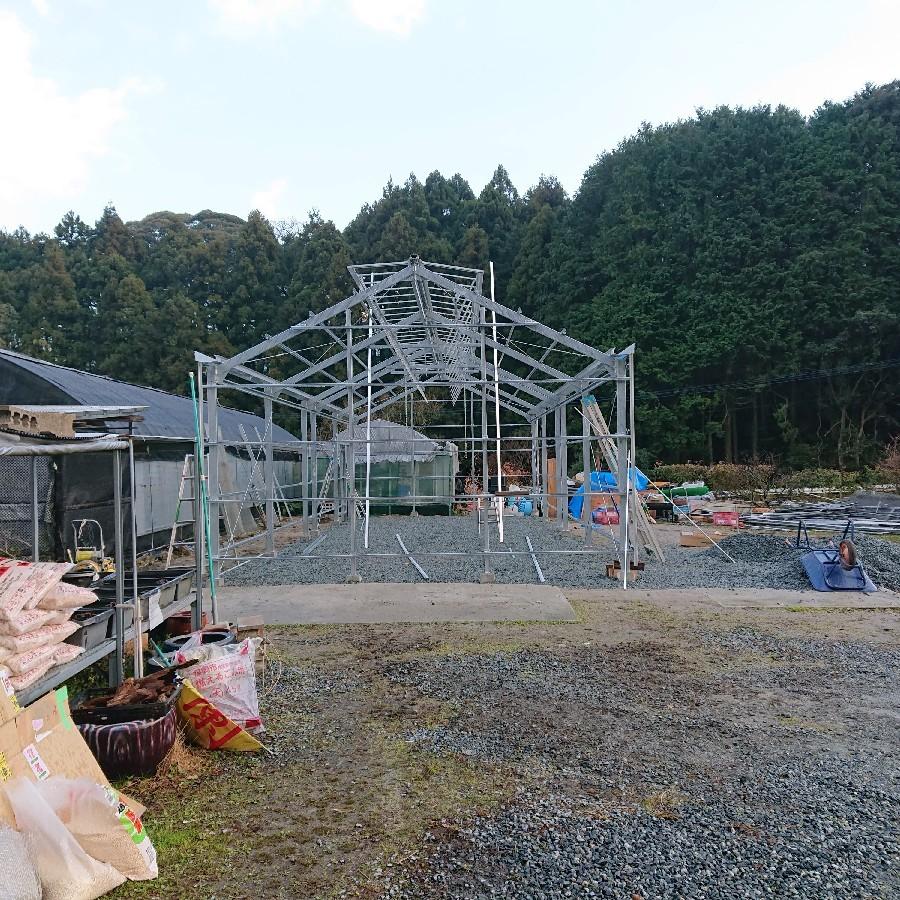 新設栽培所の途中経過_f0356792_13131783.jpg