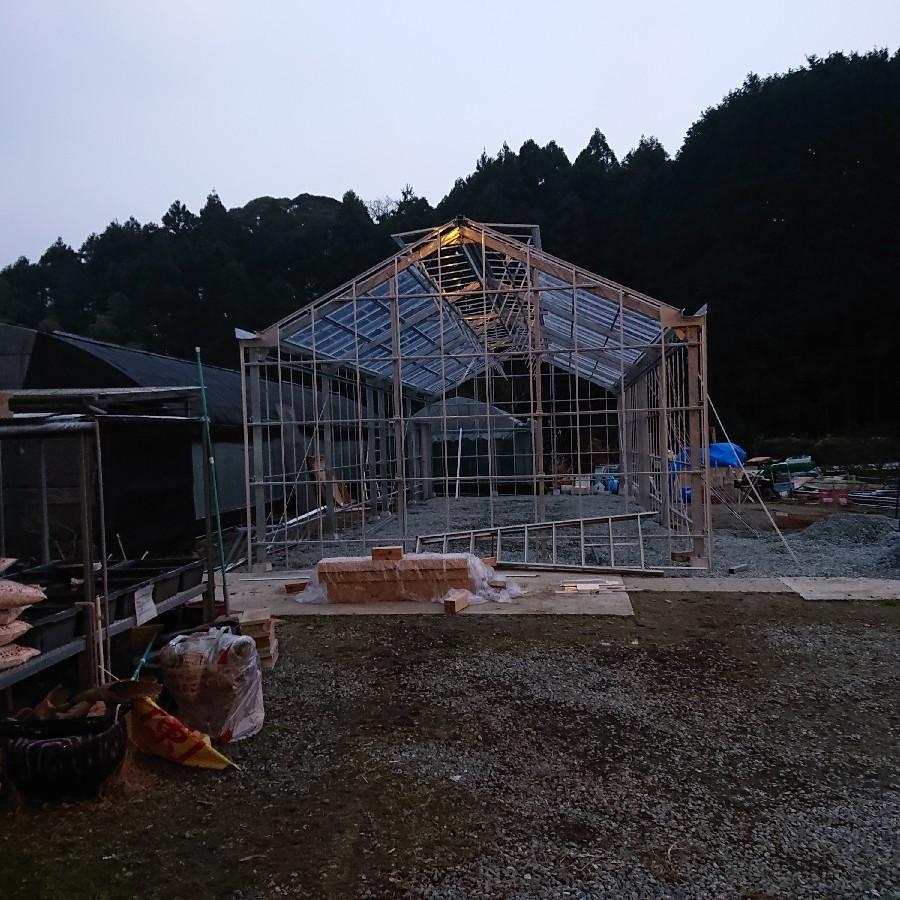 新設栽培所の途中経過_f0356792_13131799.jpg