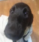犬は大らかに育てよう!④のつづき_b0084194_23095776.jpg