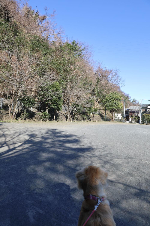 惨劇からの広い公園♪_b0275998_11234960.jpg
