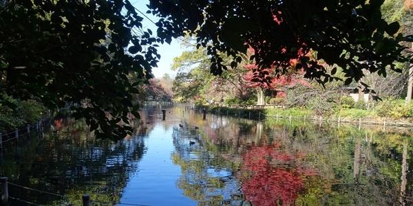 井の頭公園散策_c0051105_00140559.jpg