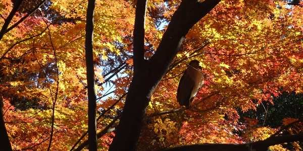 井の頭公園散策_c0051105_00145050.jpg