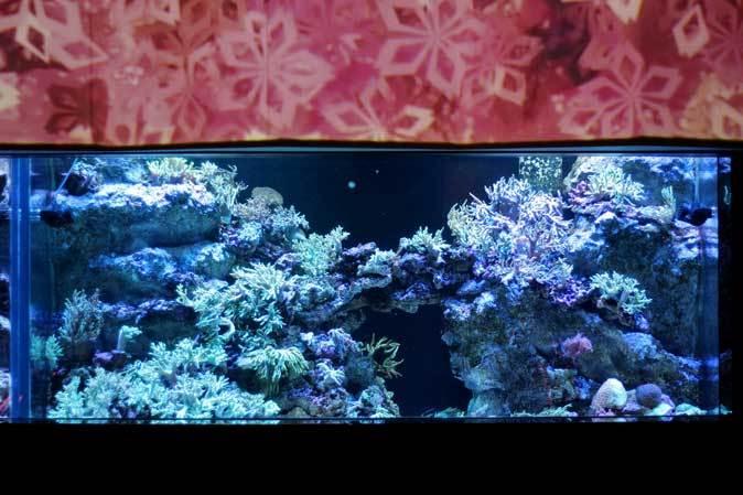 アクアパーク品川~発光サンゴ水槽群_b0355317_21400597.jpg
