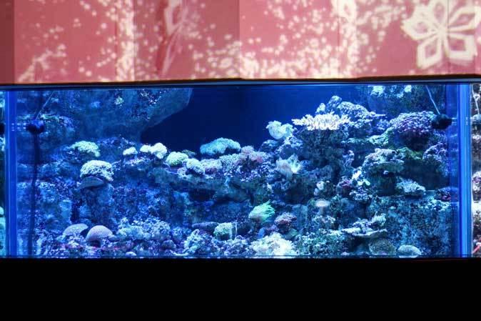 アクアパーク品川~発光サンゴ水槽群_b0355317_21412273.jpg