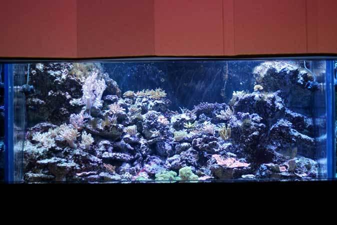 アクアパーク品川~発光サンゴ水槽群_b0355317_21433366.jpg