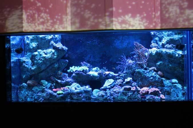 アクアパーク品川~発光サンゴ水槽群_b0355317_21435118.jpg