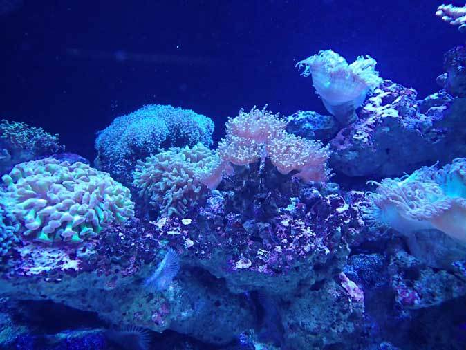 アクアパーク品川~発光サンゴ水槽群_b0355317_21441764.jpg