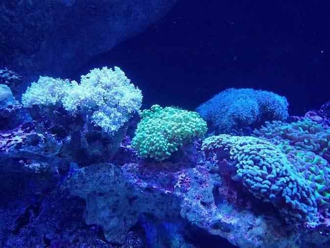 アクアパーク品川~発光サンゴ水槽群_b0355317_21500000.jpg