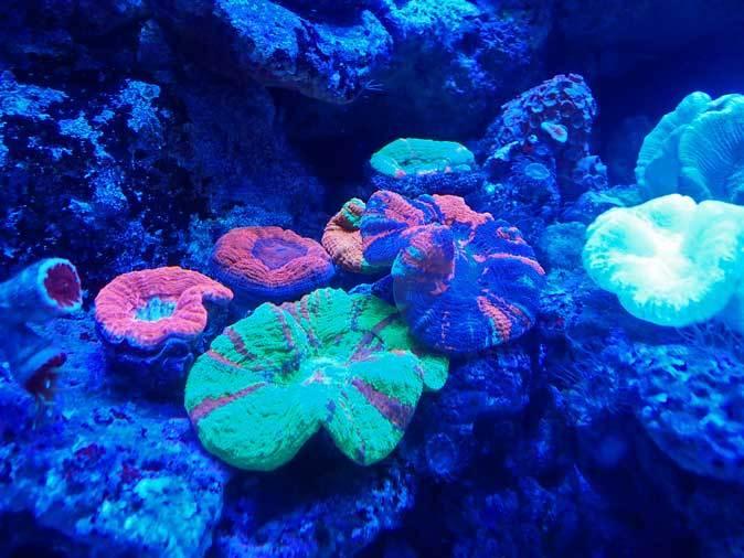 アクアパーク品川~発光サンゴ水槽群_b0355317_21505084.jpg