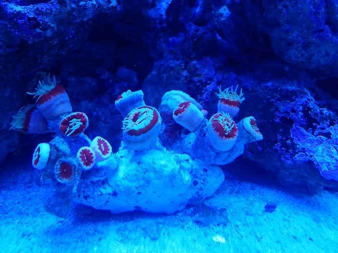 アクアパーク品川~発光サンゴ水槽群_b0355317_21510456.jpg