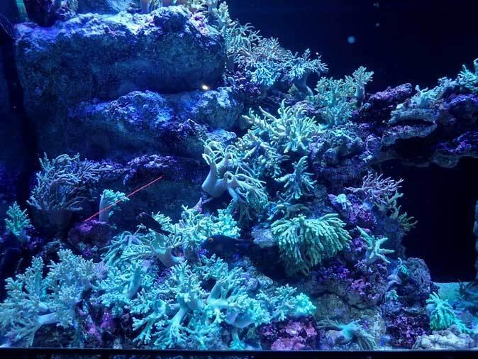 アクアパーク品川~発光サンゴ水槽群_b0355317_21513447.jpg