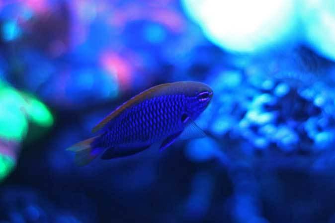 アクアパーク品川~発光サンゴ水槽群_b0355317_21535650.jpg