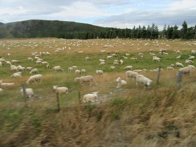 ニュージーランドツアー_e0072023_15183716.jpg