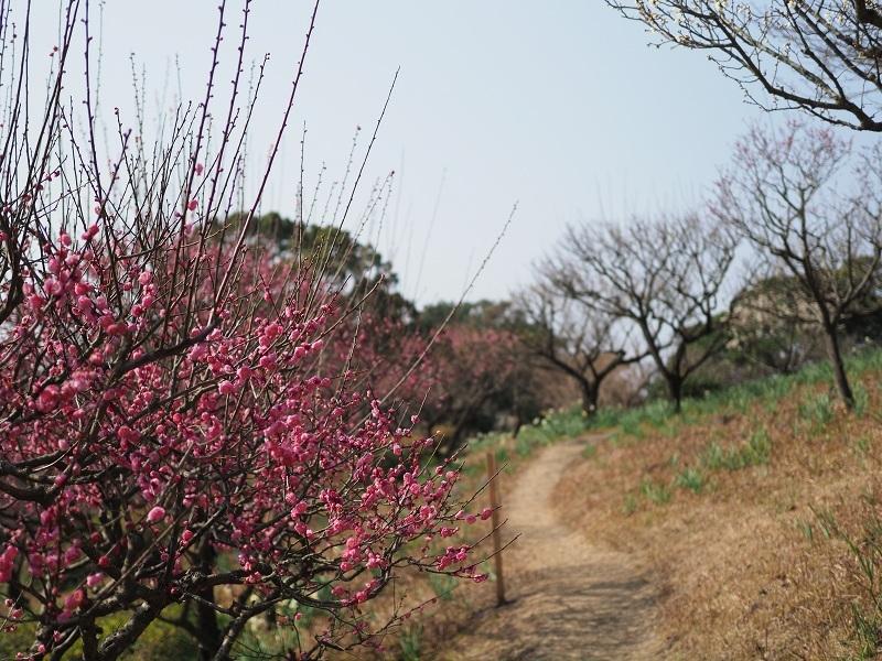 梅がほころぶ頃2020_d0052327_18032372.jpg
