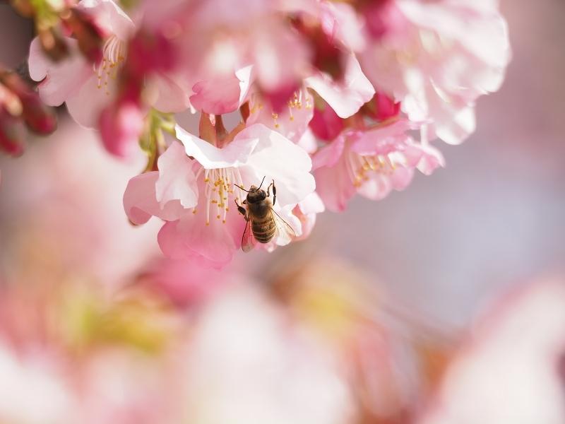 梅がほころぶ頃2020_d0052327_18095354.jpg