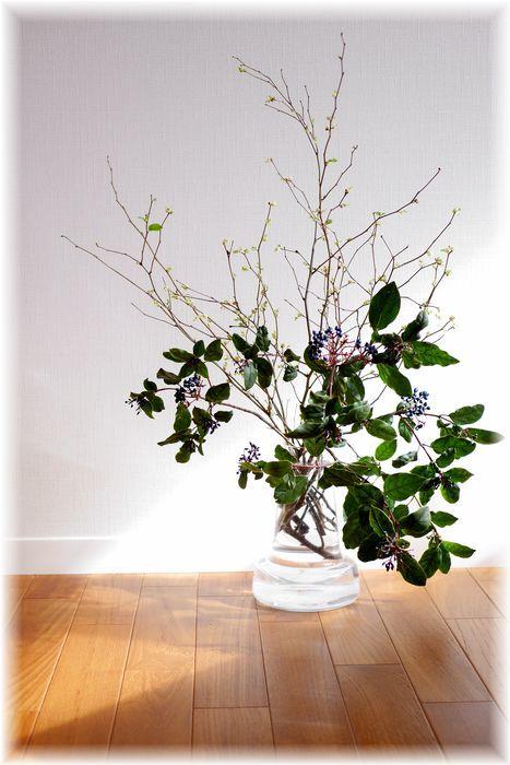 今日の花とスメドレーのボーダーニット_f0143227_19251997.jpg