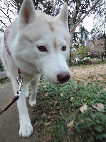 散歩屋日誌【34】_c0062832_15231142.jpg